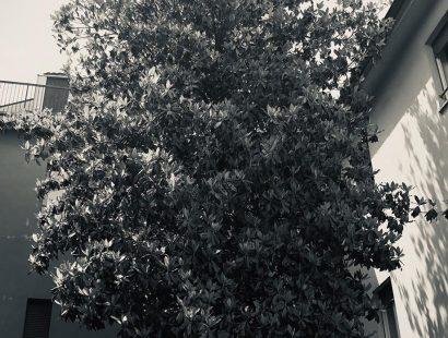 foto-06b